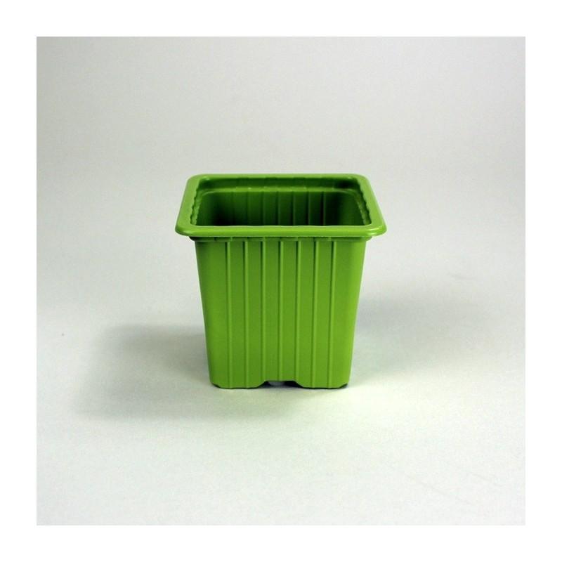 Godets 7x7x6.4 (x30) - vert bambou